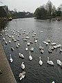 River Severn at Worcester - geograph.org.uk - 437467.jpg