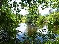 Roche Caiman wetland Seychelles.jpg