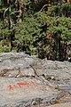 Rock paintings in Naesaaker 06.jpg