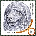 Romanian-Carpathian-Shepherd.jpg