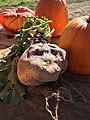 Root vegetable and pumpkins.jpg