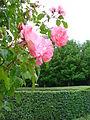 Roses Zoetermeer Floriade park 2.JPG