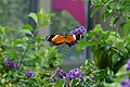 Rosine Smith Sammons Butterfly House & Insectarium August 2016 07.jpg