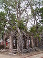 Ross Island Andaman 4140028.JPG