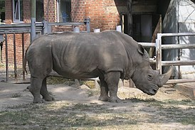 Rostov-on-Don-Zoo-Rhino.jpg