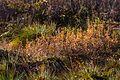 Rotes Moor, 20151101-016.jpg