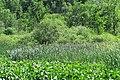 Round lake 2020-06-11 025.jpg