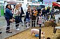 Rue Cler petting area, Paris 24 May 2014.jpg