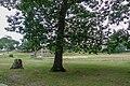 Ruggles Park, Fall River, Massachusetts-tree.jpg