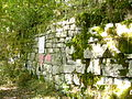 RuineLägern.JPG