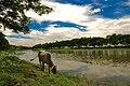 Rural Bangladesh.jpg