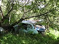 Rusting cars, Saplings - geograph.org.uk - 555088.jpg