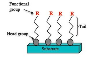 Self-assembled monolayer - Figure 1. Representation of a SAM structure