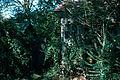 SC Ray Ashland Farm 1971 04.jpg