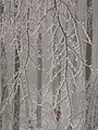 SNOW PATTERN.jpg