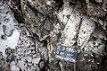 S of Mt Jackson rhyolitic breccia dyke contact splay in complex breccia.jpg
