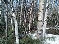 Sakhalin's nature. 06.jpg