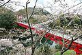 Sakurabuchi park1.JPG