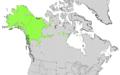 Salix alaxensis range map.png