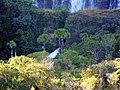 Salto de Corumbá - panoramio.jpg