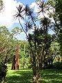 San Juan Botanical Garden - DSC07058.JPG