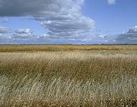 Sand Lake National Wildlife Refuge.jpg