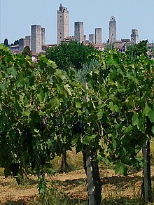 Vineyards in San Gimignano