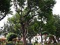 Santa Cruz Madeira Park.JPG
