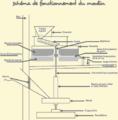 Schema-moulin-01.png