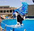 SeaWorld San Diego7.jpg