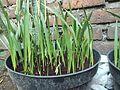 Seeds propagation.jpg