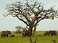 Serengeti 1 (35) (14148762854).jpg