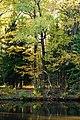 Sergievka - Autumn trees.jpg