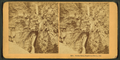 Seven Falls, Cheyenne Canon, Col, by Kilburn Brothers.png