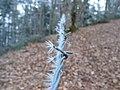 Sharp ice needles on barbwire - panoramio (1).jpg