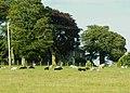 Sheep and cattle at Hall Flatt - geograph.org.uk - 494969.jpg