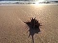 Shil beach.jpg