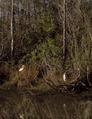 Shore birds in the Everglades, Florida LCCN2011634547.tif