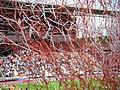 Shower of confetti before a match of FC Utrecht.jpg