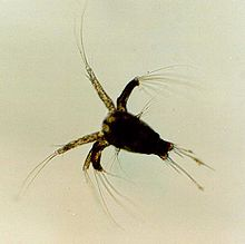 food safety in shrimp processing k anduri laxman eckhardt ronald a