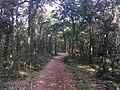 Silence of Nature 03.jpg
