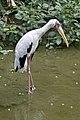 Singapore Bird Park-28and (2939121425).jpg