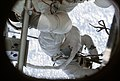 Skylab 2 View of crewmen performing EVA taken from inside OWS.jpg