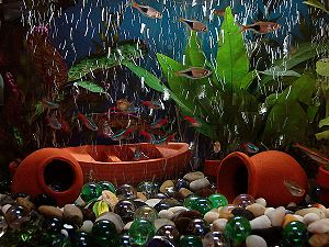 Small Aquarium with Paracheirodon innesi (neon...