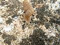 Snail (4065844190).jpg