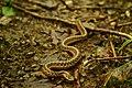 Snake (205338583).jpg