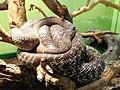 Snakes exposition Doria Museum Genoa 16.JPG