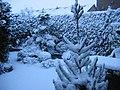 Sneeuw in een buitenwijk van Ooltgensplaat - panoramio.jpg
