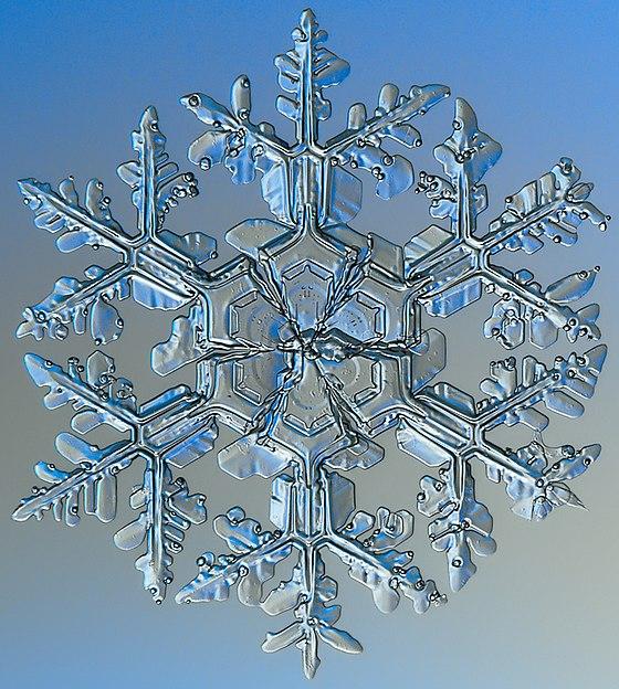 Snowflake (slang) - Wikiwand