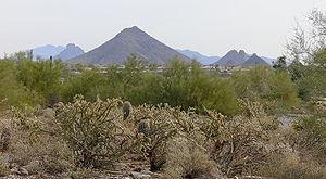 Sonoran Desert Scottsdale AZ 50349